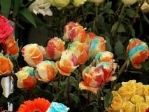 Mehrfarbige Rosen Lizenzfreies Stockbild