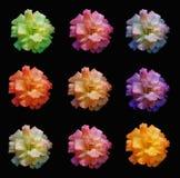 Mehrfarbige Rosen Stockbild