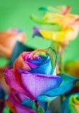 Mehrfarbige Rosen lizenzfreie stockfotografie