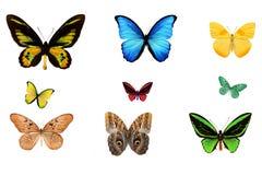 mehrfarbige tropische Schmetterlinge lokalisiert auf weißem Hintergrund Lizenzfreies Stockbild