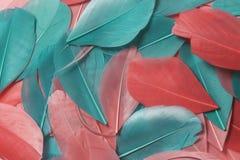 Mehrfarbige Vogelfedern von verschiedenen Farben: rot, rosa und grün werden ganz über das Feld des Rahmens zerstreut Lizenzfreie Stockfotos