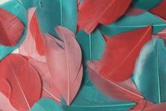 Mehrfarbige Vogelfedern von verschiedenen Farben: rot, rosa und grün werden ganz über das Feld des Rahmens zerstreut Stockfoto
