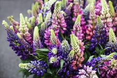 Mehrfarbiger empfindlicher Lupine blüht - natürliche Dekorationen für die Verzierung eines Hauses oder der Hochzeit Lizenzfreie Stockfotografie