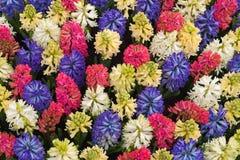Mehrfarbiger Flower-bed in Keukenhoff, die Niederlande Lizenzfreie Stockfotografie