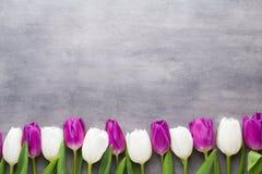 Mehrfarbiger Frühling blüht, Tulpe auf einem grauen Hintergrund lizenzfreie stockfotos
