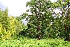 Mehrfarbiger malerischer Baum umgeben durch Sträuche Lizenzfreies Stockfoto