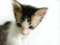 Mehrfarbiges Kätzchengesicht Lizenzfreie Stockbilder