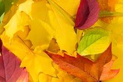 Mehrfarbiges Laub des Herbstes Lizenzfreie Stockbilder