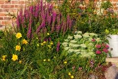 Mehrjährige Pflanzen in einem Blumenbeet Stockfotos