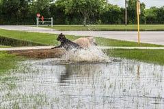30 mei, 2015 - Beverly Kaufman Dog Park, Katy, TX: honden het spelen Royalty-vrije Stock Foto's