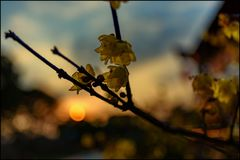 Mei Garden Springtime Blues Royalty-vrije Stock Fotografie