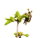 Mei-insect op de tak van boom   Royalty-vrije Stock Afbeeldingen