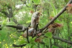 Mei-insecten op takken Royalty-vrije Stock Foto's