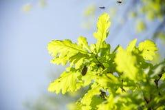 Mei-insecten op takken Royalty-vrije Stock Fotografie