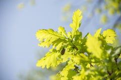 Mei-insecten op takken Stock Afbeelding