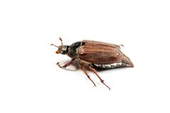Mei-insectenmacro op wit wordt geïsoleerd dat. royalty-vrije stock foto's