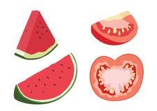 Meia bola da melancia e do tomate no vetor branco da ilustração do fundo ilustração stock