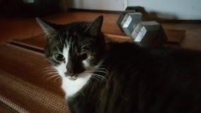 Meia cara do gato Imagem de Stock