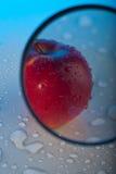 Meia maçã sob a lupa Imagens de Stock