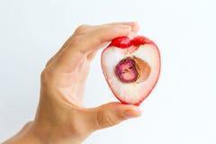 Meia Rose Apple Imagens de Stock