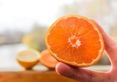 Meias laranjas em uma mão da menina Fotos de Stock