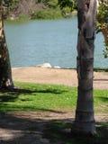 Meilen-quadratischer Park Lizenzfreie Stockbilder