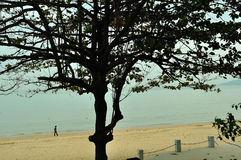 Meili Wang Sandy beach Stock Image