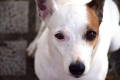 meilleur ami de chien Image stock