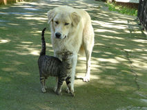 Meilleurs amis de chat et de chien Photo libre de droits