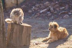 Meilleurs amis de chien et de chat jouant ensemble extérieur Photographie stock libre de droits