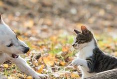 Meilleurs amis mignons de chien et de chaton de Russel de cric Photographie stock libre de droits