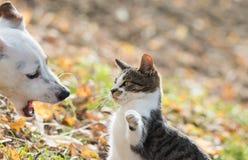 Meilleurs amis mignons de chien et de chaton de Russel de cric Image libre de droits