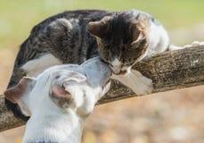 Meilleurs amis mignons de chien et de chaton de Russel de cric Photos libres de droits