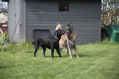 Meilleurs amis sur la pelouse Photo libre de droits