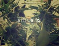 Meilleurs bourgeons fumeux Images libres de droits