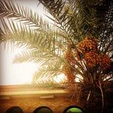 Mein Begleiterbaum Stockfoto