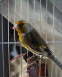 Mein bunter Papagei sein sehr nettes Stockfotografie