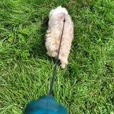 Mein Hund Lizenzfreies Stockbild