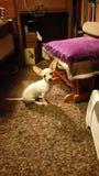 Mein Hund Stockbild