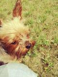 Mein Hund Lizenzfreie Stockfotos