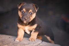 Mein Hund 016 Stockbild