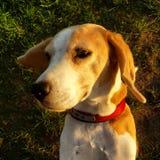 Mein Hund Stockfotografie