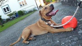 Mein Hund Lizenzfreies Stockfoto