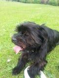 Mein Hund auf dem Gras Lizenzfreies Stockbild