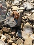 Mein Hund in einem Steinstrand stockfotografie