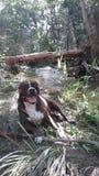 Mein Hundplätzchenweg durch The Creek Lizenzfreie Stockfotos