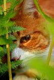 Mein kleiner Gärtner LÖWE Stockfotografie