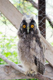 Mein kleines Baby OWL Pet! Lizenzfreie Stockbilder