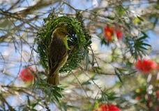 Mein Nest. Stockbild