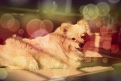 mein netter Hund Lizenzfreies Stockfoto